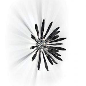 Applique moderna Corallo nera piccola : (Busto Arsizio)
