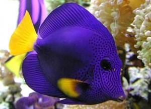 Natura sommersa acquari e pesci tropicali sannicandro for Saltwater fish representative species