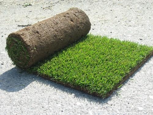 Vendita diretta prato erba naturale in rotoli bagnolo for Erba in rotoli