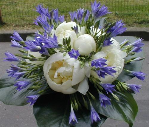 La bottega dei fiori gardone val trompia for Tipi di fiori