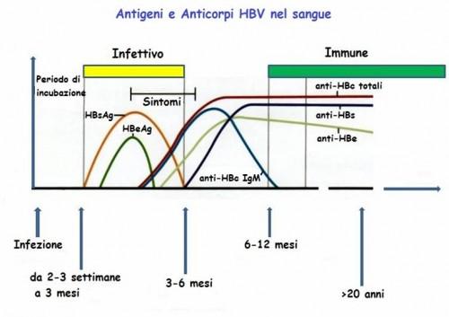 I commenti su epatite a b c sintomi e diagnosi pag 13 - Epatite c periodo finestra ...