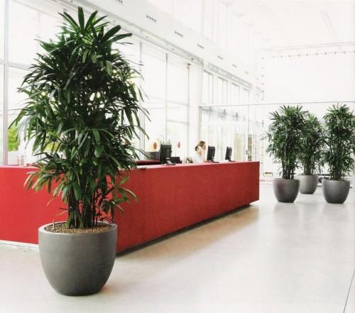 Cucina isola rovere sbiancato for Vasi per piante da interno moderni