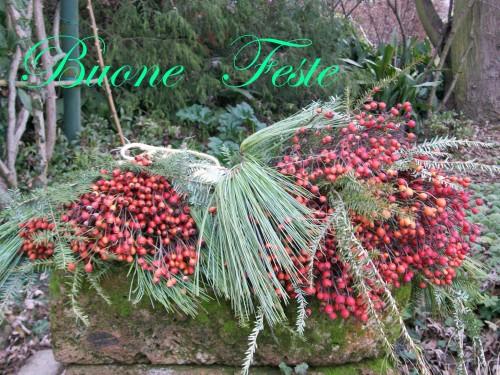 Vivai Rosso Antonio : Vivaio antonio pennati rosai e piante da frutto monticello