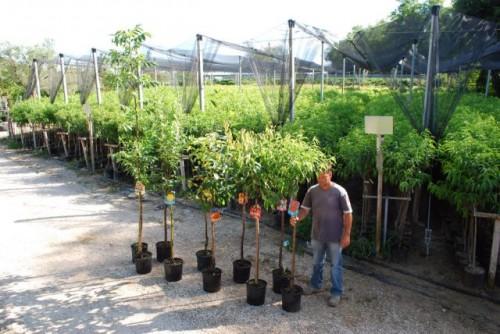 Vendita piante da frutto vivai spallacci piante nelle for Alberi in vendita
