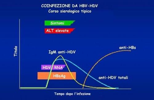 Coinfezione da virus B e virus D