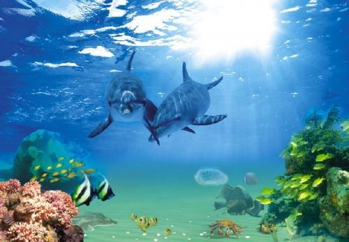 Delfini 1 : latina